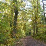 Bois de Verneuil